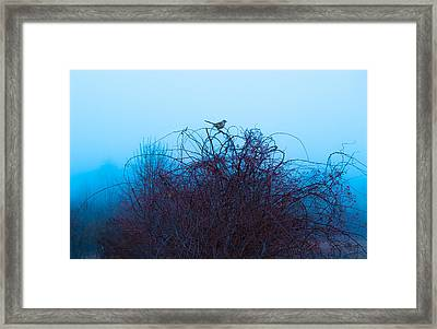 Bird On The Vine Framed Print