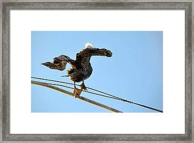 Framed Print featuring the photograph Bird On The Wire by AJ Schibig