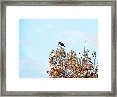 Bird On Tree Framed Print
