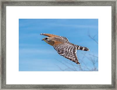 Bird Or Plane Framed Print by Phil Stone