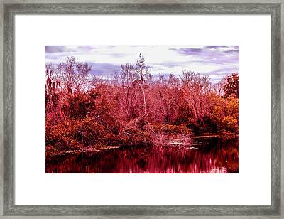 Framed Print featuring the photograph Bird Out On A Limb 2 by Madeline Ellis
