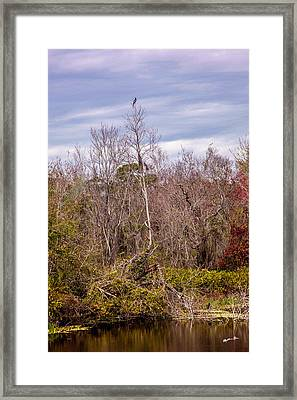 Framed Print featuring the photograph Bird Out On A Limb 3 by Madeline Ellis