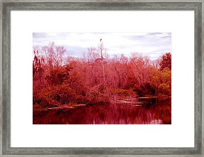 Framed Print featuring the photograph Bird Out On A Limb by Madeline Ellis