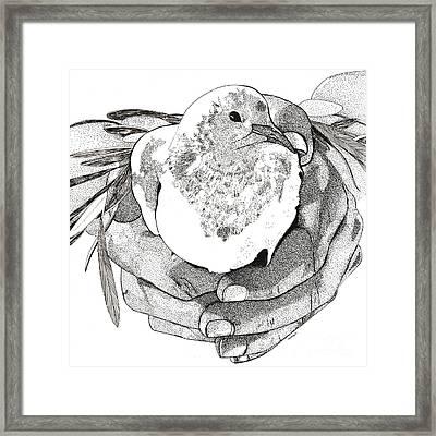Bird Peace Framed Print