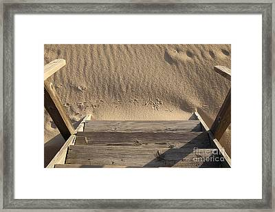 Bird Prints In The Sand Framed Print by Bryan Attewell