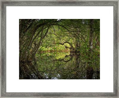 Bird Rookery Swamp Framed Print by Bill Martin