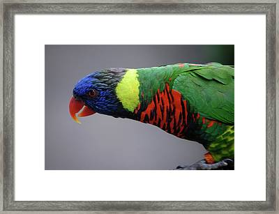 Bird Framed Print by Samantha Kimble