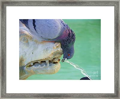 Sharing With A Bird Framed Print