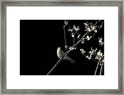 Bird Silhouette Framed Print by Martin Newman