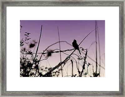 Bird Sings Framed Print by Angie Tirado