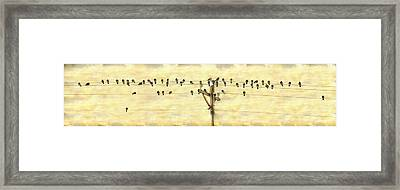 Bird Song Framed Print by James BO Insogna