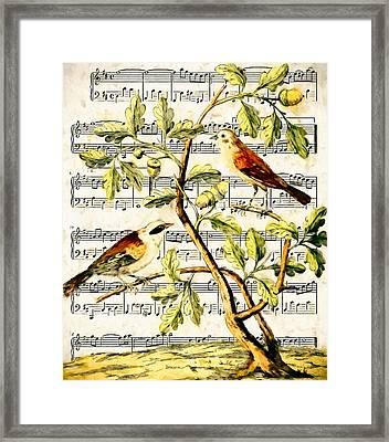 Bird Song Framed Print by John K Woodruff