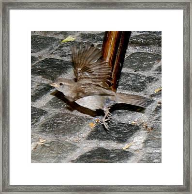 Bird Taking Flight Framed Print by Sara Summers