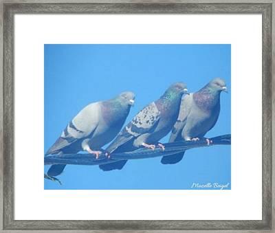 Bird Trio Framed Print