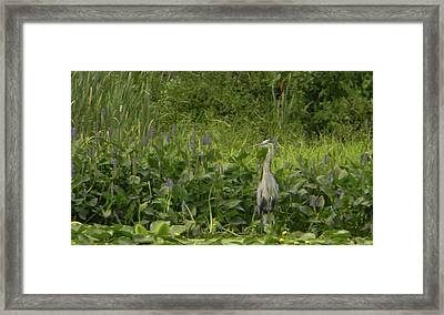 Bird Waiting Framed Print