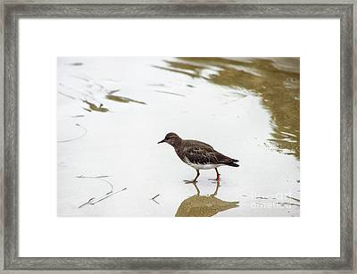 Framed Print featuring the photograph Bird Walking On Beach by Mariola Bitner