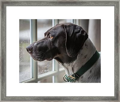 Bird Watcher Framed Print