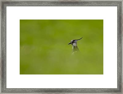 Bird-watching Framed Print by Gabor Pozsgai