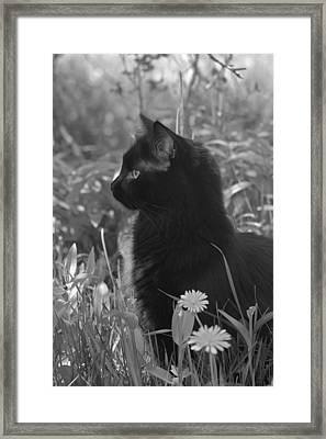 Bird Watching Framed Print by Karon Melillo DeVega