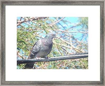 Bird Watchman Framed Print