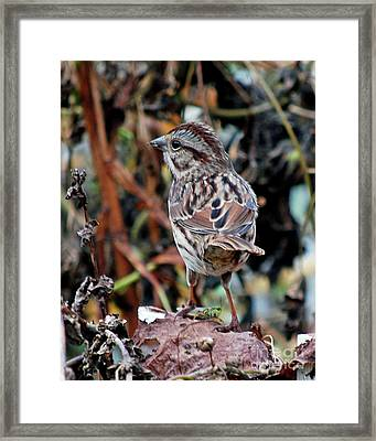 Framed Print featuring the photograph Bird With Grasshopper by Lila Fisher-Wenzel