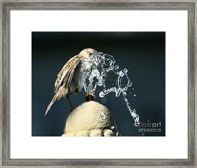 Birdbath Framed Print by Jan Piller
