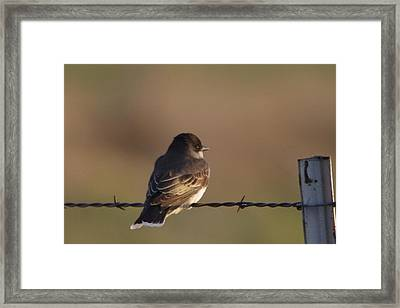 Birdie On A Wire Framed Print by Jeff Swan