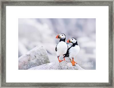 Birdland Framed Print by Evelina Kremsdorf