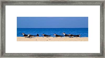 Birdline Framed Print
