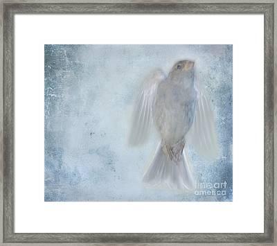 Birdness Framed Print by Jim Wright