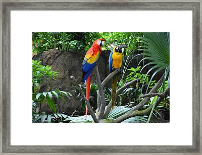 Parrots - Birds 03 Framed Print by Bruce Miller