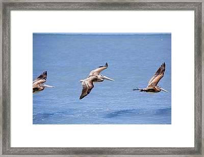 Birds 1039 Framed Print