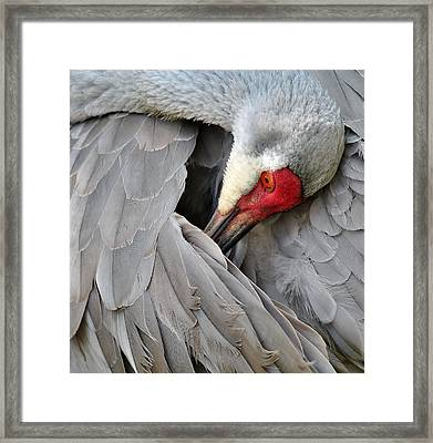 Birds 2 17b Framed Print