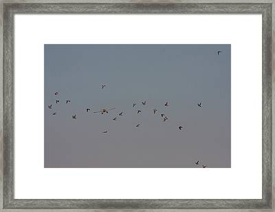 Birds And Airplane Framed Print