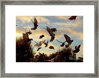 Birds And Fun At Butler Park Austin - Birds 1 Framed Print by Felipe Adan Lerma