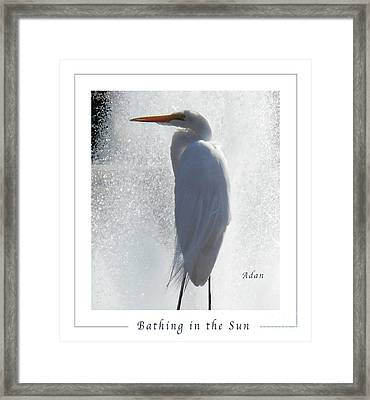 Birds And Fun At Butler Park Austin - Birds 2 Macro Poster Framed Print by Felipe Adan Lerma