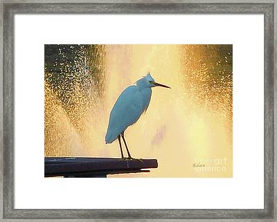 Birds And Fun At Butler Park Austin - Birds 3 Detail Macro Framed Print by Felipe Adan Lerma