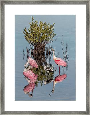 Birds And Mangrove Bush Framed Print