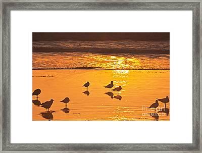 Birds At Sunset Framed Print by Loriannah Hespe