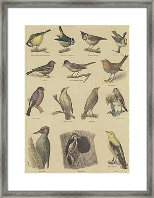 Birds Beneficial To Agriculture Framed Print