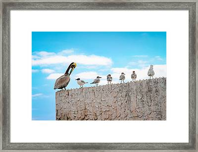 Birds Catching Up On News Framed Print