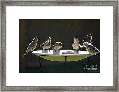 Birds Drinking From Bird Bath In Summer Sunshine Framed Print by Gordon Wood