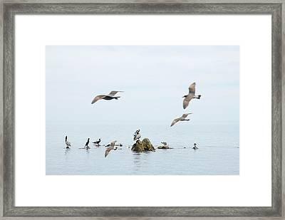 Birds Framed Print by Elisa Locci