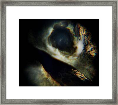 Bird's Eye Framed Print