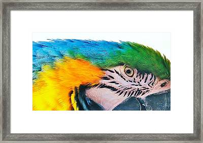 Framed Print featuring the photograph Bird's Eye View by Al Fritz