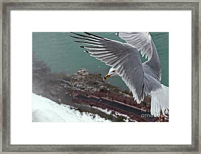 Bird's Eye View Framed Print by Charline Xia