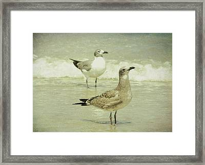 Seabirds View Framed Print by JAMART Photography