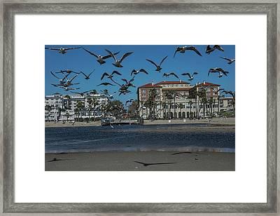 Birds Flight From The Right Of Passage Framed Print