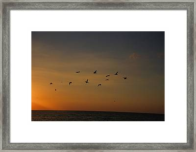 Birds Fly Into The Wind Above The Gulf Framed Print by Stacy Gold