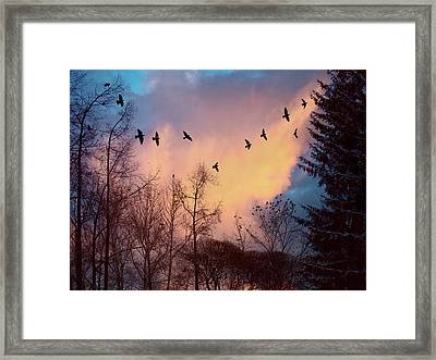 Framed Print featuring the photograph Birds Fly by Vladimir Kholostykh